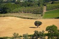 Convegno Rapporto agroalimentare 2010 Emilia-Romagna