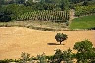 L'agroalimentare piacentino e' pronto per il 2015? Coordinare gli impegni, tra elementi di forza e criticita' da superare